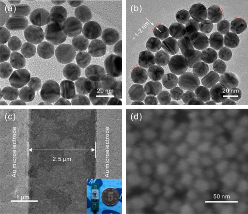 Characterization.(a) High magnified TEM image of bare Au NPs. (b) High magnified TEM image of Au NPs capped with GSH (Au@GSH). 1–2 nm of GSH layer is clearly seen. (c) SEM image of two adjacent interdigital Au microelectrodes with self-assembled Au@GSH NPs, the inset corresponds to optical photo of the fabricated molecular-gap device. (d) Magnified SEM image of Au@GSH NPs between the interdigital Au microelectrodes.
