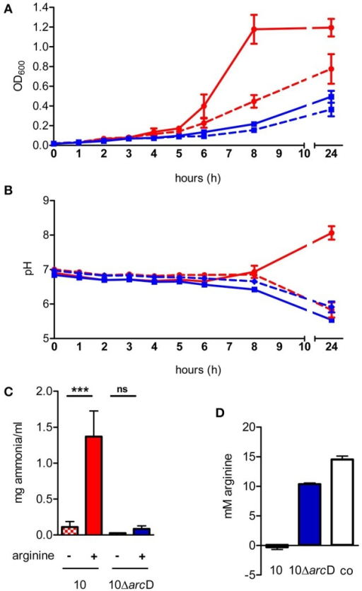 The S. suis ArcD contributes to environmental pH homeostasis and biological fitness in an arginine-dependent manner. (A) Growth kinetics of S. suis WT strain 10 (red) and its isogenic arcD-deficient mutant strain 10ΔarcD (blue) in a tryptone-based medium containing 10 mM galactose (dotted lines) and 50 mM arginine (solid lines) if indicated. The optical density at 600 nm OD600 was measured every hour. Data represent means and standard deviations of a representative experiment performed in triplicates. Experiments were repeated at least two times. (B) Bacteria were grown as described in (A), the course of pH values were measured every hour. Data represent means and standard deviations of a representative experiment performed in triplicates. Statistics were performed in a one-tailed t-test with p < 0.01. (C) Ammonia production of the culture supernatant was measured after 24 h of growth. Results are given as mg ammonia per ml of medium (ml−1). Statistical significance is indicated for a one-sided t-test (***p < 0.001; ns, not significant). (D) The amount of arginine in the culture supernatant of WT strain 10 (red bar) and 10ΔarcD (blue) was detected by a method adapted from Sakaguchi (1925). Results are given in mM arginine. TY medium alone (white bar) served as negative control.