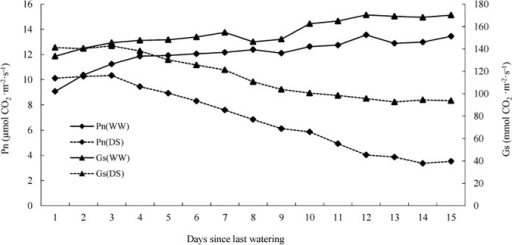 Net photosynthetic rate (Pn) and stomatal conductance (Gs) of well-watered (WW) and drought-stressed (DS) P. mongolica seedlings.