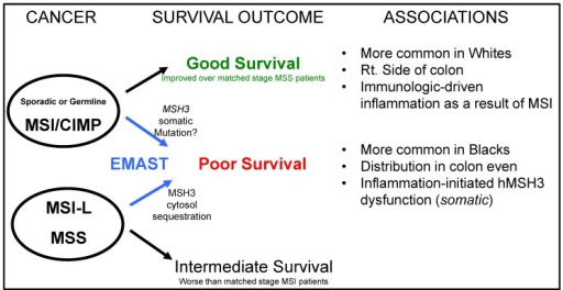 Summary diagram relating colorectal pathogenesis that may be modulated by EMAST, affecting patient outcome. Colorectal cancers can be dichotomized into MSI-H and MSS, and previously MSI-L was lumped in with MSS cancers. EMAST, the biomarker for loss of MSH3 (MutSβ function), may modify the behavior of colorectal cancer, worsening patient survival. This is in contrast to patients with MSI-H colorectal cancers with the dominant genotype of loss of DNA mismatch repair and who have good survival outcome. Among EMAST cancers, a more balanced defect between moderate loss of mismatch repair and moderate loss of repair of double strand breaks may drive the overall worse behavior. Data indicates that there are racial differences for the prevalence of MSI-H and EMAST, as well as the type of inflammation associated with each biomarker.
