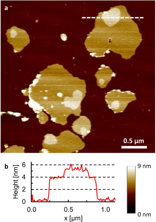 Microdomains in detergent-resistant membranes.a, AFM topography of detergent-resistant membranes (isolated on sucrose gradient, fraction 5) adsorbed on a mica substrate (dark brown), recorded in buffer solution at 25°C. Microdomains appear as elevated (brighter) plateaus with lateral dimensions of 100–300 nm on top of the membrane patches. b, Height profile corresponding to the white line drawn in (a).