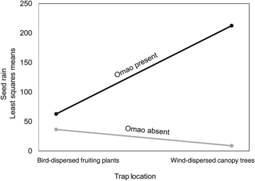 Seed rain (least squares means) under a wind-dispersed canopy tree (M. polymorpha) and under fleshy-fruited plants at sites with and without Omao.