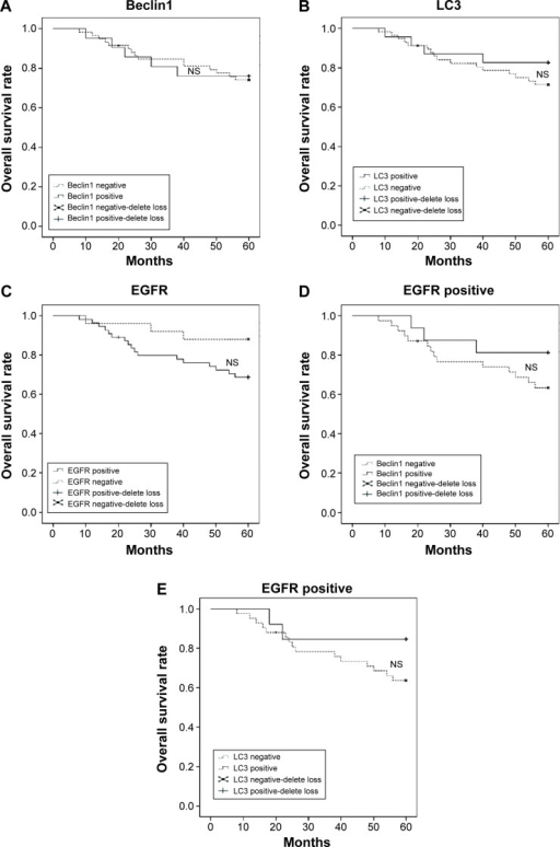 The univariate survival analyses with Kaplan–Meier method and log-rank test. There were no significant differences in the 5-year OS rate between the Beclin1- or LC3- or EGFR-positive and -negative patients with cervical SCC. (A–C) There was no significant difference in the 5-year OS rate between the Beclin1- or LC3-positive and -negative patients with positive EGFR expression (D and E).Abbreviations: OS, overall survival; SCC, squamous cell carcinoma; NS, not significant.
