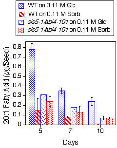 Seedlings carrying the sis5-1/abi4-101 mutation are resistant to the inhibitory effects of exogenous glucose on mobilization of seed storage lipids. Eicosenoic (20:1) fatty acid levels were measured in mutant and wild-type seeds/seedlings harvested from the indicated media at different times after the start of imbibition. Results presented are means ± SD (n = 3). This experiment was repeated, with similar results.