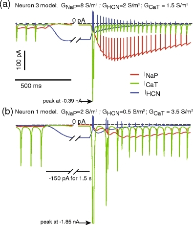 Currents underlying rebound patterns in the model of Neuron 1 and Neuron 3. The T-type calcium current (ICaT, green) underlies the fast burst after the offset of hyperpolarization, while the persistent sodium current (INaP, red) underlies the subsequent prolonged rebound period of spiking. Depending on the relative density of GCaT and GNaP present, each component of the rebound can be more or less pronounced. Note that IHCN (blue) only makes a minor contribution to the rebound depolarization. This is due to the small driving force of IHCN (reversal potential of −45 mV) during the rebound depolarization. (b) A pronounced fast spike burst is present with high GCaT density. The peak of ICaT reaches −1.85 nA, and is shown truncated to allow visualization of smaller currents