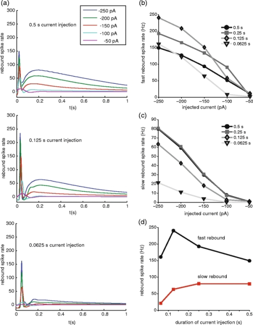 Rebound rates as a function of duration and amplitude of negative current injection in simulations of Neuron 3. (a) Rebound rate profiles for 0.5, 0.125, and 0.0625 s duration current injections of varying amplitude. (b, c) Both the fast burst and the prolonged rebound period are reduced by lowering the amplitude of injected current. The prolonged rebound period is sensitive both to duration and amplitude of current injection, and is greatly decreased for the shortest stimulus at all amplitudes. In contrast, the fast burst is maximal at 125 ms duration and is diminished after shorter or longer current injections (see Section 3). (d) Dependence of fast burst and prolonged rebound on the duration of current injections with an amplitude of −250 pA