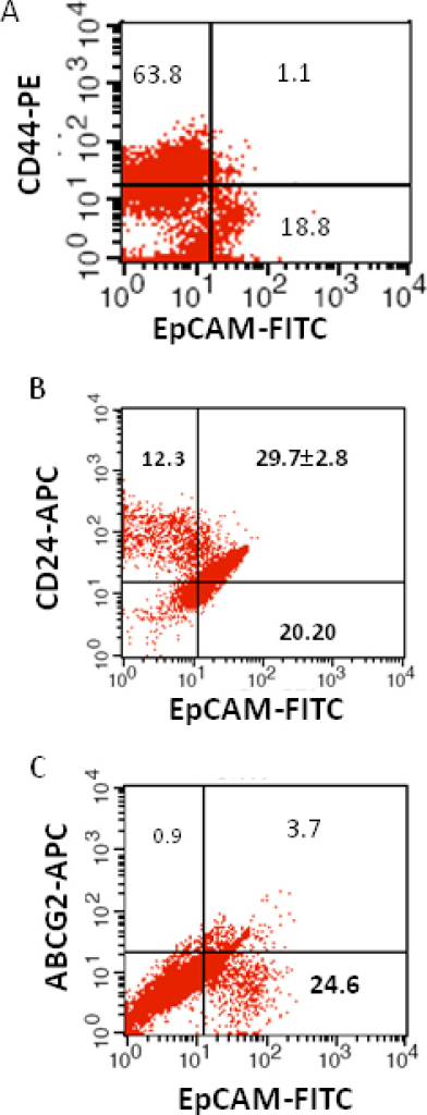 Investigation of the co-expression of epithelial cell adhesion molecule (EpCAM) with cluster determinant (CD)44, CD24 and ATP binding cassette protein G2 (ABCG2) markers in retinoblastoma (RB) tumor 4. A: Scatter plot shows the co-expression of EpCAM with CD44. B: Scatter plot shows the co-expression of EpCAM with CD24. C: Scatter plot shows the co-expression of EpCAM with ABCG2. EpCAM-fluorescein isothiocyanate (FITC) represents EpCAM positive cells identified using FITC labeled antibody. CD44-PE represents CD44 positive cells identified using phycoerythrin labeled antibody. CD24-APC represents CD24 positive cells identified using allophycocyanin labeled antibody. ABCG2-APC represents ABCG2 positive cells identified using allophycocyanin labeled antibody..