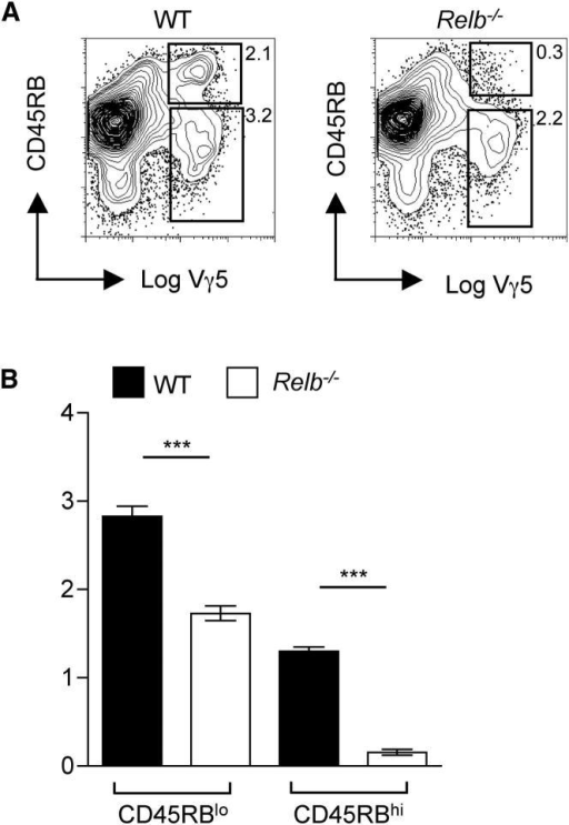Defective Intrathymic Maturation of Vγ5+ DETC Progenitors in Relb-Deficient Mice(A) Analysis of Vγ5TCR+ thymocyte maturation in WT and Relb-deficient E15 thymus lobes placed in FTOCs for 5 days. Numbers indicate the percentages of cell populations.(B) Percentages of immature Vγ5+CD45RBlo and mature Vγ5+CD45RBhi thymocytes in WT (black bars) and Relb-deficient (white bars) FTOCs. A minimum of six mice were analyzed, and an unpaired Student's two-tailed t test was performed with asterisks signifying a significant difference, where p < 0.0001.