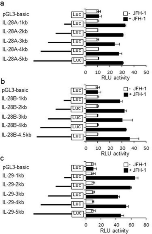 Transcriptional activity at the IL-28A, IL-28B, and IL-29 promoter by HCV infection. PH5CH8 cells were transfected with a mixture of the luciferase constructs containing various 5' deletions of the human IL-28A (A), IL-28B (B), or IL-29 (C) promoters and Renilla luciferase control vector. The cells were cultured for 18 hours and then infected with JFH-1 for 12 hours. Luciferase activity in whole cell lysates was normalized to Renilla luciferase activity. Data are the mean ± SD of triplicate data points from five independent experiments.