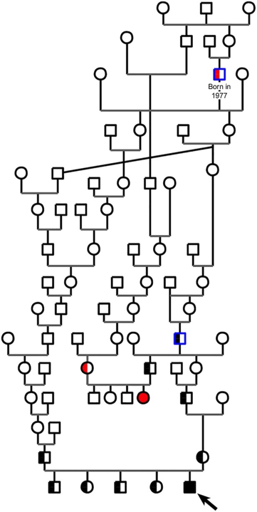 Pedigree-tree of a Birman cat family segregating hypotrichosis with reduced life span.Circles represent females, squares represent males. Affected kittens are depicted with fully filled symbols and the proband shown with an arrow. Healthy carriers are depicted with two-toned symbols. Red symbols represent cats with only phenotyping data (no DNA available); black symbols represent cats with phenotyping and genotyping data. For example, healthy cats with a N/del genotype are depicted with a two-toned black symbol. Common male ancestors of the two affected kittens are contoured in blue. This pedigree-tree suggests an autosomal recessive inheritance of the syndrome.