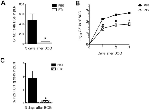 PTx mutes P25 TCRTg-cell priming by inhibiting skin DC migration and BCG transport to DLN.(A) Total number of CFSE+ MHC-IIhigh CD11c+/low skin DCs in BCG-draining pLN from animals treated in the footpad with PTx. WT mice received an injection of 1 μg PTx (Sigma) or PBS in the footpad. Animals were inoculated 4hrs later with BCG in the same footpad. CFSE was injected into the same footpads 24hrs before sacrifice. Three days after BCG, pLNs were isolated and frequency of migrating skin DCs analyzed by flow cytometry. Dashed line depicts average number of CFSE+ skin DCs in uninfected, PBS-injected controls. (B) CFUs of BCG in pLN at the indicated time points after infection were determined on 7H11 agar from WT mice treated with PTx or PBS as in (A). (C) Naïve P25 TCRTg cells were CFSE-labeled and transferred into congenic CD45.1+ recipients. Twenty-four hrs later, animals were treated with PTx as in (A) and inoculated with BCG in the same footpads. Expansion of P25 TCRTg cells was determined 3 days later by flow cytometry. Dashed line depicts average frequency of P25 TCRTg cells obtained from uninfected, PBS-injected controls. For each experiment, at least 5 mice were used for BCG-infected groups and 3 for PBS controls. Bars indicate standard error of the mean. One of two independent experiments shown. *Denotes statistically significant difference in BCG-infected, PTx-treated group compared to BCG-infected, PBS-treated animals.