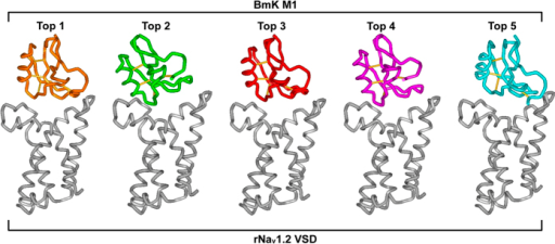 Five top ZDOCK complexes between BmKM1 and the rNav1.2 VSD.These complexes are displayed in a tube style with WebLabViewer (MSI, San Diego, California, USA). Disulfide bond connectivities in BmKM1 (pdb entry 1SN1) are shown as sticks. The toxin has only 3.77 Å of root-mean-square deviation (RMSD) among different complexes, as calculated by Swiss-PdbViewer (http://spdbv.vital-it.ch/).