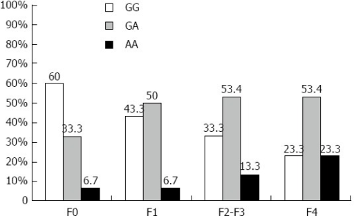 Distribution of tumor necrosis factor α -G308A polymorphism in hepatitis C virus infected patients with different fibrosis grade (F0-F4). Genotyping of TNFα -G308A was conducted for 120 chronic HCV patients (F0-F4) using PCR-RFLP analysis. The different TNFα -G308A genotypes were represented as percentages and compared among HCV patients with different fibrosis grades: F0 (n = 30), F1 (n = 30), F2-F3 (n = 30), F4 (n = 30). TNFα: Tumor necrosis factor alpha; HCV: Hepatitis C virus; RFLP: Restriction fragment length polymorphism.