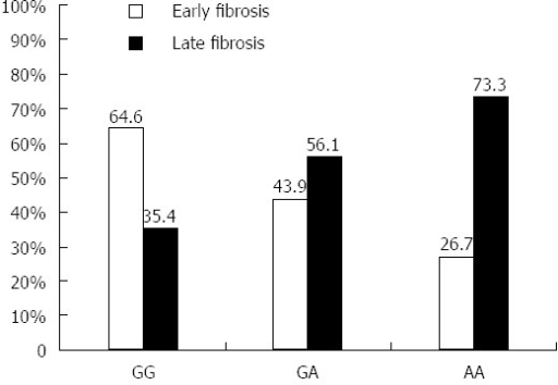 Frequency of each tumor necrosis factor α -308 genotype in early and late hepatitis C virus fibrosis patients. Genotyping of TNFα -G308A was conducted in 120 chronic HCV patients (F0-F4) using PCR-RFLP analysis. The frequency of each genotype (GG, GA, AA) was calculated as percentage and compared in early (F0-F2, n = 60) and late (F2-F4, n = 60) HCV fibrosis patients. TNFα: Tumor necrosis factor alpha; HCV: Hepatitis C virus; RFLP: Restriction fragment length polymorphism.