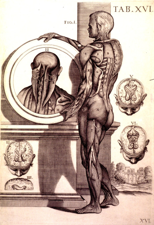 <p>The central image is rear view of a naked man standing next to a pedestal in a landscape.  The man is shown holding a circular plate on which is engraved the rear view of a human head and torso.  The figure in the circular plate is labeled 'II', and the different parts of the musculature are labeled with letters as they are in the central figure.  There are four other figures (labeled 'III' to 'VI') of various cross-sections of the brain.</p>
