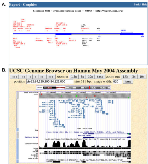Different representations of the set of putative TFBSs in the human MCM5 gene promoter. A. Graphical representation of the hit set presented in Figure 3. B. The hit set was exported to the UCSC Human Genome Browser as a custom track. The region displayed in this image extends to 500 bp upstream of the coding sequence start. Note that the clusters of predicted binding sites correspond to peaks in the human/mouse conservation track at the bottom, suggesting that those regions are functional. The positions of the most conserved elements displayed in the conservation track are the ones used in the previous page to highlight hits in evolutionary conserved regions (see Methods for details).