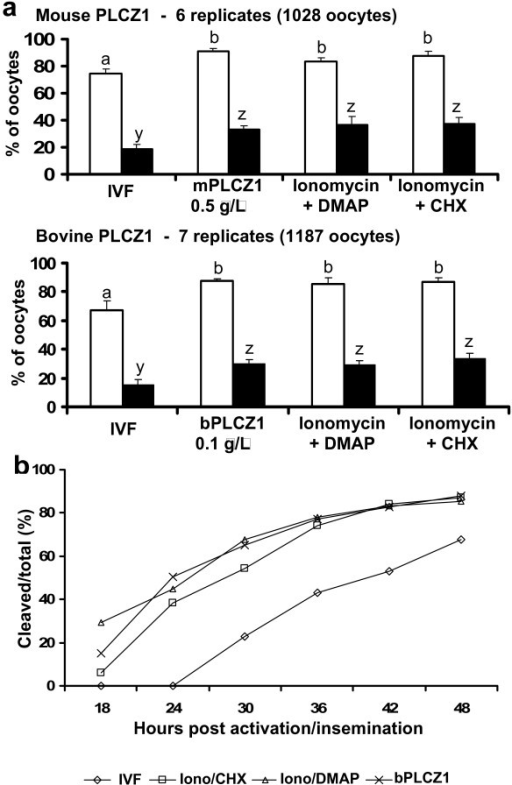 PLCZ1 cRNA injection induces bovine parthenogenetic development at similar rates to common chemical activation protocols. a) Mean cleavage (open bars) and blastocyst (black bars) rates after IVF or parthenogenetic activation using different methods. Error bar represents SEM. a, b or y, z: different superscripts represent P < 0.05. b) Cleavage of embryos after IVF or parthenogenetic activation using different methods. Iono = ionomycin; CHX = cycloheximide.