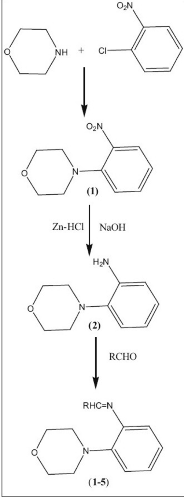 Synthetic route for the preparation of 4-(2-aminophenyl)-morpholines1: R = C6H5, 2: R = furyl, 3: R = m-NO2C6H4, 4: R = o-ClC6H5 and 5: R = -CH=CHC6H5