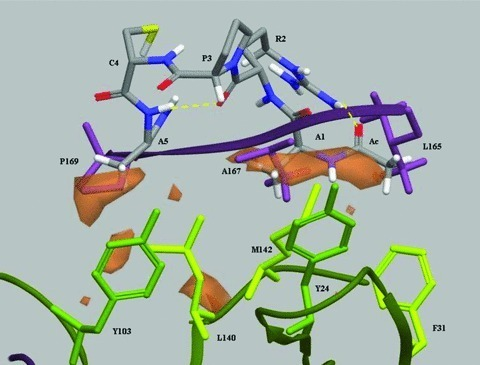 Hypothesis of interaction between Ac-ARPCA-NH2 and FGF2. The global minimum conformation of Ac-ARPCA-NH2 peptide (in atom type in the figure) was superimposed to the crystal structure of FGFR1 (PDB code: 1FQ9) in the β-sheet region 164–170 of the hydrophobic domain D2 of the receptor (FGFR1 residues in purple: Leu165, Ala167 and Pro169). The best superimposition was obtained between the following amino acid pairs of the peptide and receptor, respectively: methyl group of the acetyl cap with Leu165, Ala 1 with Ala167 and Ala5 with Pro169. As shown in the figure, the peptide could mimic the highly conserved b-sheet portion of the receptor interacting with FGF2 (FGF2 residues in green: Tyr24, Phe31, Tyr103, Leu140 and Met142). The hydrophobic characteristics of FGF2 in this region are represented by orange surfaces.