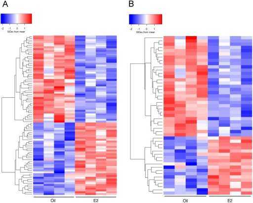 Heatmaps comparing cerebral cortices from oil- and E2-treated mice.Hierarchical clustering was used to visualize the transcript levels of (A) 88 genes that were significantly altered (FDR p<0.05) by E2 treatment or (B) 49 genes that were altered 1.2 fold or more by E2 treatment (FDR p<0.05). Each column represents cortical tissue from one mouse (8 mice total) and rows indicate genes. Colors symbolize increased (red) or decreased (blue) transcript levels.