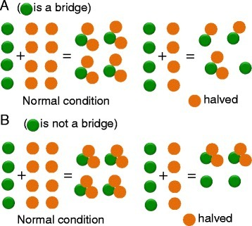 Complex topology and dosage sensitivity. a Case of a trimer in which the green subunit is a bridge. Halving of the latter leads to halving trimer output. However, halving the amounts of the orange subunits can lead to as low as 25 % of trimer. Overexpression of the orange subunits can be inconsequential from the perspective of the trimer output but entails a futile cost, whereas overexpression of the green ones leads to a titration effect (formation of dimeric subcomplexes), which reduces trimer output. b When the orange  subunits can, for instance, preassemble, halving their amount translates into a proportional decrease of trimer and the increase of the green  ones does not alter the amount of trimer. This shows how the topology of the complex and not only its composition modulate dosage sensitivity