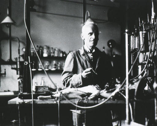 <p>Professor Ernest H. Starling in the midst of an experiment upon circulation with a dog.</p>