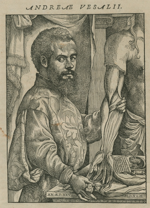 <p>Half-length, body to right, Vesalius showing musculature of arm.</p>