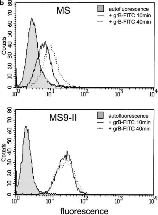 Residual uptake of granzyme B by MPR- L cell fibroblasts. (a) Confocal micrograph of MS (MPR-) and MS9-II (MPR-overexpressing) L cells after exposure to FITC–granzyme B (50 nM) for 60 min at 37°C or without addition of FITC–granzyme B (autofluorescence [AF], bottom). Association of granzyme B with the plasma membrane (m) and in the late endosomal compartment (l) are shown. (b) Cytofluorographic analysis of MS and MS9-II cells after incubation with FITC–granzyme B (50 nM) at 37°C for the times indicated or in the absence of FITC–granzyme B (filled traces).