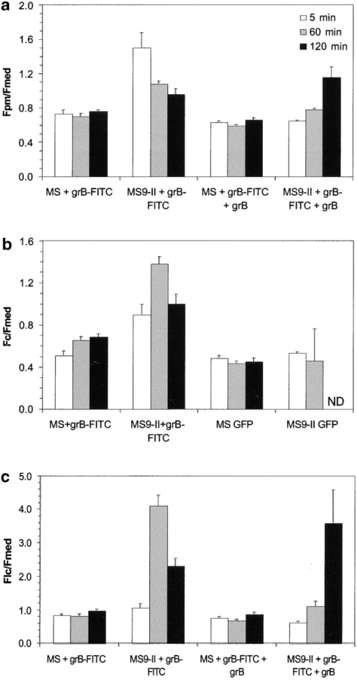 Quantitative kinetic analysis of the uptake of FITC–granzyme B into MS and MS9-II cells. Uptake of FITC–granzyme B (grB) or unglycosylated GFP by MS (MPR-) and MS9-II (MPR-overexpressing) L cells. The uptake of both fluoresceinated molecules onto the plasma membrane (top) into the cell cytoplasm (middle) or into the late endosomal compartment (bottom) was quantitated by confocal laser scanning microscopy and image analysis as described previously (Jans, 1995). The results are expressed as a ratio between total cytoplasmic fluorescence (Fc), plasma membrane fluorescence (Fpm), or fluorescence of the late endosomal compartment (Flc) and extracellular fluorescence (Fmed) ± standard error of the mean. Each data point was derived from measurements on at least 30 cells selected at random after subtraction of autofluorescence (as described in Materials and methods).