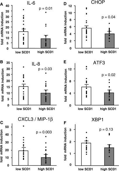 High inducibility of SCD1 is associated with a low inflammatory and ER stress response to palmitate in human myotubes. Myotube donors were divided by the mean of SCD1 induction by palmitate into a group with low (□) and high (▩) inducibility of SCD1. Induction of inflammatory cytokines IL-6, IL-8, and CXCL3/MIP-1β by palmitate was compared between the low and high SCD1 group. The high SCD1 group had significantly lower induction of inflammatory cytokines IL-6 (15.7- vs. 8.9-fold, P = 0.01) (A), IL-8 (15.0- vs. 9.9-fold, P = 0.03) (B), and CXCL3 (20.0- vs. 11.4-fold, P = 0.003) (C). The induction of key ER stress markers by palmitate was also compared between the low and high SCD1 group. The high SCD1 group had significantly lower induction of CHOP (5.53- vs. 3.99-fold, P = 0.04) (D) and ATF3 (6.02- vs. 4.05-fold, P = 0.02) (E) and tended to lower induction of XBP1 (1.86- vs. 1.52-fold, P = 0.13) (F).