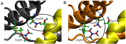In active Bax, Arg94 recruits Asp98, destabilizing the C-domain inside the BH groove.Upon activation, Arg94 becomes more positive, leading to the recruitment of Asp98, abrogation of the Asp98-Ser184 interaction, and ultimately destabilization of the C-domain inside the BH groove [16], [40]. The color coding from Figure 1 is maintained. Additionally, the atoms in residues Arg94, Asp98 and Ser184 are displayed explicitly. Colors are coded according to their EEM charges, where the color scale ranges from red, through green, to blue, as values of atomic charges go from negative to positive. The EEM charges were computed using parameter set RS2-E (see Figures 2 and 3). (A) In inactive Bax, Asp98 is engaged in an interaction with Ser184, which keeps the C-domain in its binding pocket. (B) In active Bax, the now more positively charged Arg94 (see also Table S1) has sequestered Asp98, which no longer contributes to the stabilization of the Bax C-domain in its BH groove.