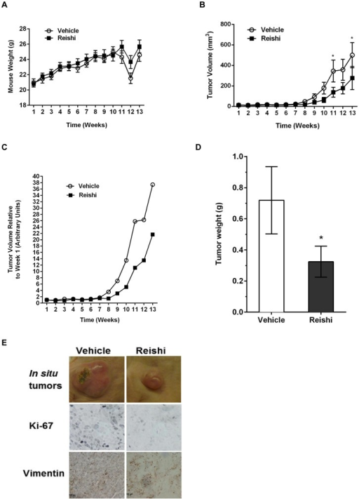 Reishi reduces tumor growth, tumor weight, and proliferative and mesenchymal marker expression.1.5×106 cells/100µL of SUM-149 cells, were injected into the mammary fat pad of severe combined immunodeficient (SCID) mice. One week following injection, mice were orally gavaged with vehicle, (n = 11) or 28 mg/kg BW Reishi (n = 11) daily for a period of 13 weeks. A. Mice weights were recorded weekly. There were no differences in body weights of mice that received Reishi compared to animals that received vehicle control. B. Tumor volume was recorded weekly using caliper measurements, and measured as described in materials and methods. C. Average tumor volume measurements per week from mice treated with vehicle or Reishi were normalized relative to the average tumor volume measurements from mice treated with vehicle or Reishi obtained at week one. Reishi significantly reduces tumor growth by 58% (P<0.02). D. Tumor weights were obtained at the end of the study. Columns show means ± SEM. Reishi significantly (*P<0.05) reduces tumor weight by 45%. E. Tumors were excised on the 13th week post Reishi, fixed in 10% formalin and embedded in paraffin before immunostaining with antibodies against Ki-67 and vimentin. Reishi treated tumors show reduced size, lower Ki-67 and Vimentin protein expression.