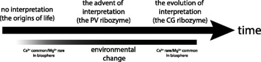 Proposed evolutionary progression of interpretation in theTetrahymenaribozyme system. At or near the origins of life on the Earth 4 Ga, there were no catalytic RNAs with any interpretive ability. Selection for interpretation in a relatively calcium-rich but magnesium poor environment (Table 3) drove the advent of RNAs akin to the PV, which used Ca2+ as a sign for the preferred Mg2+ ion. As the abiotic and biotic environments evolved to sequester Mg2+ + ions in cells, the advantage to interpretation waned, and in contemporary cells relatively enriched in Mg2+ + RNAs such as the CG evolved under pressures to maximize their use of Mg2+.