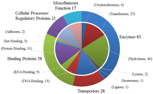 Classification of 207 HPs into various groups by utilizing the functional annotation results of various bioinformatics tools.The chart shows that there are 83 enzymes, 28 proteins involve in transportation, 58 binding proteins, 21 proteins involved in cellular processes like transcription, translation, replication etc. and 17 showing miscellaneous functions among 207 HPs from T. pallidum ssp. pallidum.