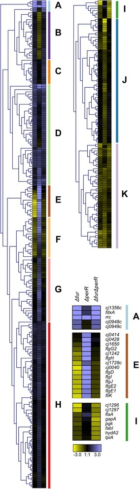 Hierarchical clustering of genes differentially expressed under iron-limited conditions. Genes found to be differentially expressed in at least one strain under iron-limited conditions were subjected to hierarchical clustering to identify corresponding genes with similar expression profiles. Clusters I-K were split from the original clustering figure for ease of viewing. The columns each represent one strain (Δfur, ΔperR, ΔfurΔperR) and relative fold changes in expression are presented in a Log2 scale with up-regulated genes in blue and down-regulated genes in yellow. The clustering resulted in 11 main clusters (a-k). Clusters a, e and h are expanded to highlight the genes present in each cluster. See Additional file 7: Table S6 for further details and Additional file 9: Figure S3 for full histogram
