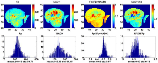 Typical redox images and corresponding histograms of the p53 wt group. The x and y axes represent the scanning matrix and the color bar is a reference to the colors in the corresponding image. Both Fp and NADH are in the unit of μM in reference to the corresponding solution standard of the analytes. The spatial resolution is 200 μm and the section depth is 1300 μm.