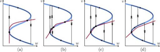 Singular limit bifurcations at the lower fold  and their singular limit orbits in system (1) (, ). (a) (Type I) singular saddle-node homoclinic (SNIC) () together with a singular Bogdanov–Takens bifurcation (= singular BT/SNIC); (b) singular Andronov–Hopf bifurcation with incomplete family of canard cycles (); (c) family of (incomplete) canard cycles and family of singular saddle-node homoclinics of canard type (); (d) (Type II) singular Andronov–Hopf bifurcation and (complete) family of canard cycles ()