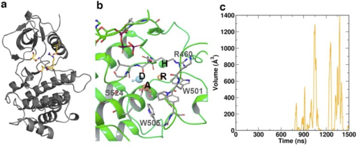 Specific structural features of the various states of ZAP70 kinase domain: (a) The salt bridge D379-R496 and the intermittent hydrogen bonding between N348-S497 (yellow) connect the C- and N-lobes and restrict access to the catalytic cleft.Additionally these bonds restrict activation loop positioning. (b) The cryptic pocket adjacent to the activation loop spontaneously opened during simulation and was unique to the non-phosphorylated state. Key residues lining the pocket are indicated in gray. Four consensus pharmacophore features were identified by fragment screening. These comprise the acceptor A, donor D, ring R, and a hydrophobic feature H, indicated inset. (c) The cryptic pocket repeatedly opened and closed over the final ~1μs of simulation time, reaching a maximum volume of ~1400 Å 3