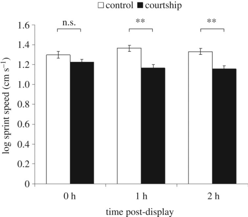 The performance capacities (sprint speeds over 50 cm) of males that had courted and control males 2 h, 1 h or immediately after displaying. Error bars represent standard errors.