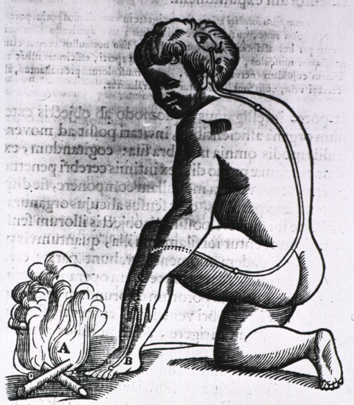 <p>Human figure kneeling on right knee; the left foot and hand are close to a fire; there are two parallel lines drawn on the body from the left foot to a point on the brain for the transmission of the sensation(s) of heat and/or pain.</p>