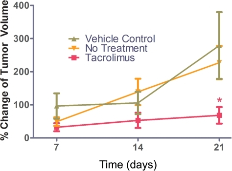 Tacrolimus inhibited the growth rate of MMTV-neu transgenic mouse tumors.MMTV-neu transgenic mice were treated with tacrolimus 3 mg/kg/day i.p., no treatment control, 20% intralipid i.p. control beginning when tumors became palpable, and was continued for 21 days. Tumor volumes were measured on day 7, 14 and 21, and the growth rate (percent change in tumor volume per day) was compared between control (no treatment), control (20% intralipid) and tacrolimus treated groups. There was no statistically significant difference between control (untreated) and control (20% intralipid) groups, and therefore the controls were combined for analyses. At 21 days there was a 73% reduction in the growth rate for tacrolimus treated mice compared to no treatment (n = 19 tacrolimus treated, n = 15 control, *p = 0.003). Tacrolimus treated mice were significantly different from control (no treatment, p = 0.01, and control 20% intralipid, p = 0.01). There was no weight loss or lethargy in the tacrolimus-treated mice or the 20% intralipid treated mice.
