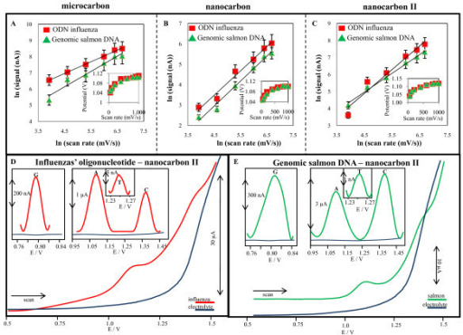 Cyclic voltammetry. The dependences of adenine peak height on ln of scan rates (50, 100, 200, 400, 600 and 800 mV/s) measured at (A) microcarbon, (B) nanocarbon and (C) nanocarbon II. In insets: dependencies of adenine peak potentials on ln of scan rate. Square wave voltammetry. SW voltammograms of (D) single strand oligonucleotide influenza (13 μg/mL), and (E) double strand genomic DNA (15 μg/mL). In insets: signals of all nucleic acid bases after baseline correction and smoothing of raw data.