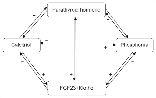 Interaction of major players involved in phosphate homeostasis
