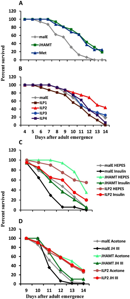 JH and insulin regulate starvation resistance.A. RNAi-aided knockdown in the expression of genes coding for JHAMT or Met extended the starvation survival. Percent beetles survived during starvation after injection of control malE, JHAMT, or Met dsRNA respectively into 40 newly emerged male adults are shown. Starvation survival was recorded from day 4 to day 14. B. RNAi-aided knockdown in the expression of genes coding for ILP2 extend starvation survival. Percent beetles survived during starvation after injection of control malE, ILP1, ILP2, ILP3, or ILP4 dsRNA respectively into 40 new emerged male adults are shown. Starvation survival was recorded from day 4 to day 14. C. Bovine insulin can rescue the starvation survival of JHAMT or ILP2 RNAi beetles. Percent beetles survived after injection of control malE, JHAMT, ILP2 dsRNA into day 0 male adults followed by injection of either 25 mM HEPES or 25 mM HEPES containing 10 mg/ml insulin into day 5 adults are shown. The starvation survival was recorded from day 9 to day 14. D. JH III rescues starvation survival in JHAMT but not in ILP2 RNAi beetles. Shown are percentages of beetles survived after injection of control malE, JHAMT, ILP2 dsRNA into day 0 male adults followed by topical application of either acetone or 10 mM JH III in acetone on days 3, 5, and 7. The starvation survival was recorded from day 9 to day 14.