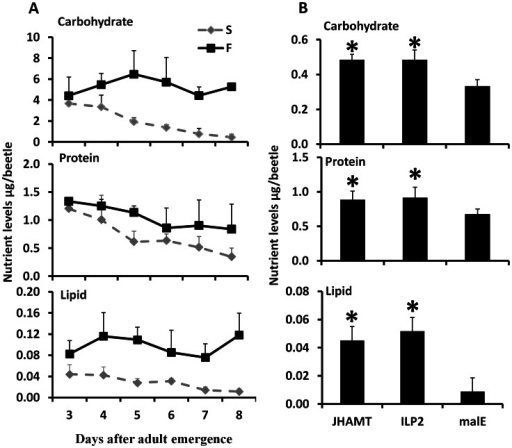 JH and ILP2 regulate carbohydrate, protein, and lipid metabolism during starvation.A. Total carbohydrate, protein, and lipid levels were determined by Anthrone reagent, Bradford, and vanillin reagent respectively in samples collected from day 3 to day 8 starved and fed male beetles. Three beetles were used for each time point and six biological replicate were used. The Means+S.D (n = 6) are shown. B. The nutrient levels including carbohydrate, protein, and lipid are regulated by JH and ILP2 during starvation. The male beetles injected with malE, ILP2, or JHAMT dsRNA were collected on day 8. The total carbohydrate, protein, and lipid were determined. Shown are the Means+S.D (n = 6). Asterisks show treatments that are significantly different (P<0.05) by one-way ANOVA.