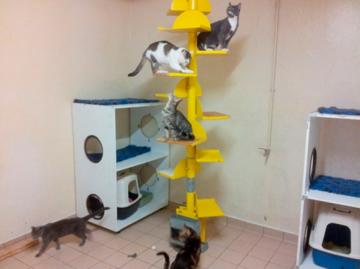 Experimental cat room.