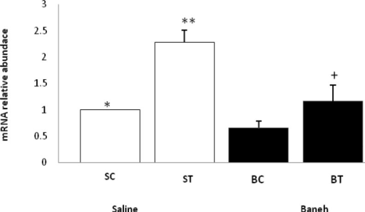 Real-time PCR of liver ABCG5 mRNA relative expression in saline- control (SC), saline-training (ST), Baneh-control (BC), and Baneh-training (BT) wild-type female rats. Wild-type female rats Data expressed as mean ± SEM. Each column is assigned to one group and 5 rats per group.*, SC vs ST, (P< 0.001) **, ST vs BT, (P < 0.001) +, BT vs BC, (P< 0.069)
