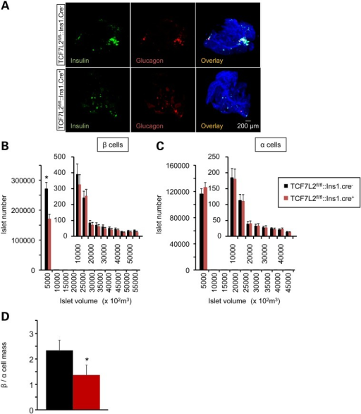 Impact of Tcf7l2 deletion on β and α cell mass. (A) Representative 3D images from OPT (see Material and Methods) of Tcf7l2fl/fl::Ins1.Cre+ and Tcf7l2fl/fl::Ins1.Cre− pancreata labelled with anti-insulin and anti-glucagon primary antibodies, and revealed using AlexaFluor 568 and 680, respectively. Right hand-most panels are overlaid with the autofluorescence signal revealing the pancreatic ductal system. Quantification of β (B), α (C) and (D) β/α cell mass from Tcf7l2fl/fl::Ins1.Cre+(red) and Tcf7l2fl/fl::Ins1.Cre− (black) knockout mice pancreata from 20-week-old mice that had been maintained on high fat diet. Quantification was conducted using Volocity software (Invitrogen), N = 4 mice per genotype.