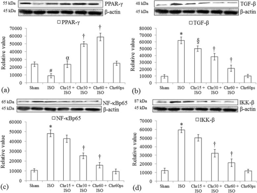 Effect of chrysin on PPAR-γ,TGF-β and inflammatory protein expressions following isoproterenol-induced myocardial injury. (a) PPAR-γ; (b) TGF-β; (c) NF-κBp65 and (d) IKK-β. All values for protein expressions are expressed as mean ± S.D (n = 3/group). #P < 0.01, *P < 0.001 vs. sham and §P < 0.05, αP < 0.01, †P < 0.001 vs. ISO.