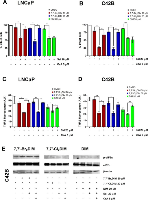 Cyclosporin A (CsA) abrogates salubrinal-mediated sensitization of prostate cancer cells to mitochondrial dysfunction using sub-toxic concentrations of 7,7′-dihaloDIMs or DIMThe percentage of intact LNCaP (A) and C42B (B) cells pre-treated for 4 hours with salubrinal, salubrinal and CsA, or 0.3% DMSO, followed by a 24 hour exposure to mildly toxic concentrations of 7,7′-Br2DIM, 7,7′-Cl2DIM or DIM. TMRE fluorescence of LNCaP (C) and C42B (D) cells pre-treated for 4 hours with salubrinal and cyclosporin A (CsA), or 0.3% DMSO followed by a 4 hour exposure to 7,7′-Br2DIM or 7,7′-Cl2DIM. (E) Phosphorylation of eIF2α in C42B cell extracts after a 24 hour exposure to mildly toxic concentrations of 7,7′-Br2DIM, 7,7′-Cl2DIM or DIM with or without a 4 hour pre-treatment with salubrinal, salubrinal and CsA, or 0.3 % DMSO.